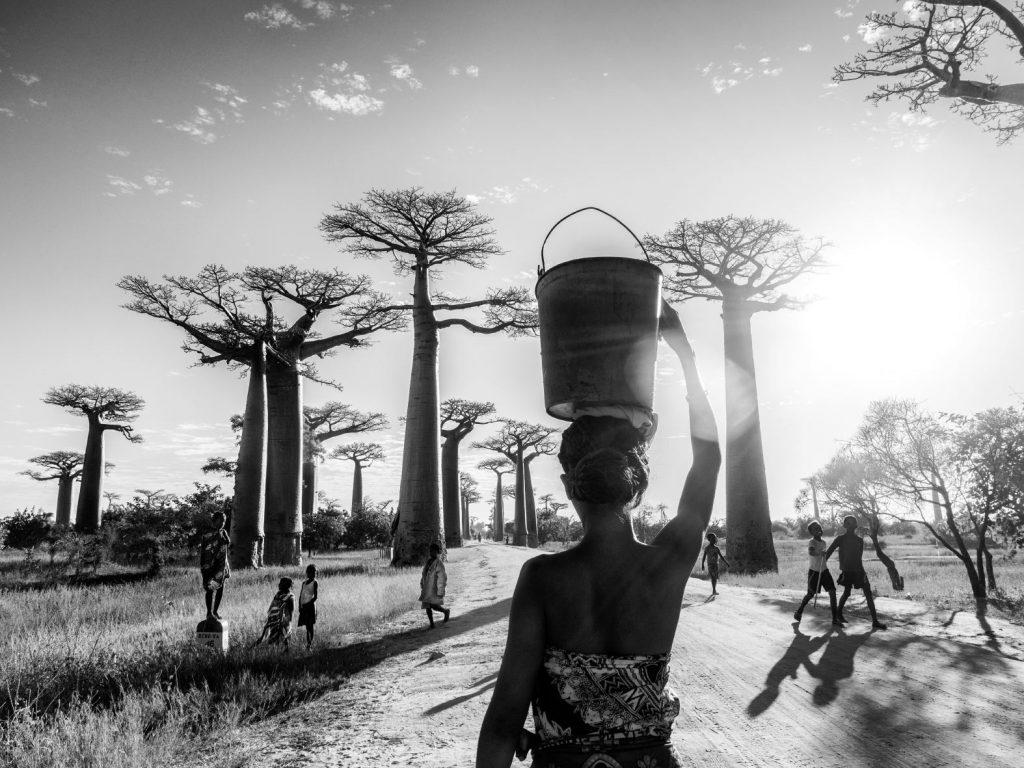 Baobabs_Sil_4289814