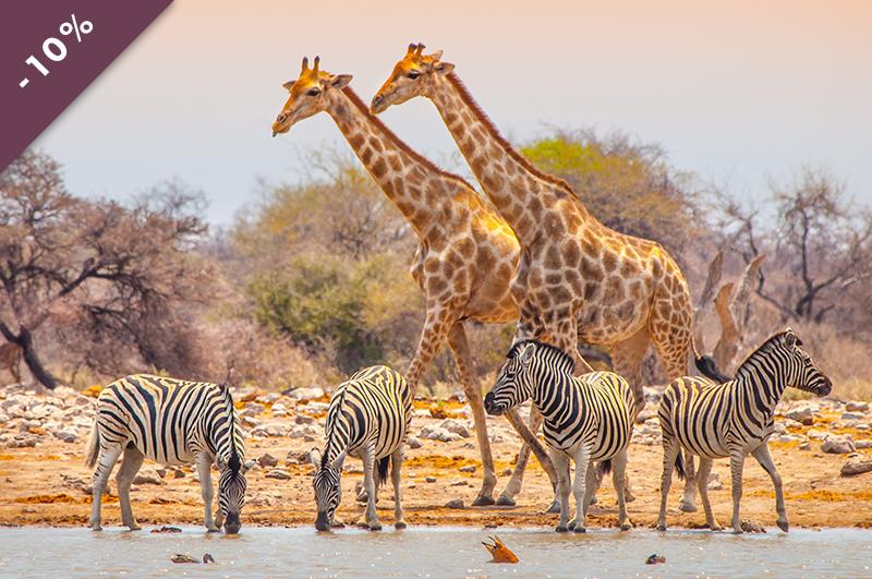 massai_giraffe_un_inoubliable_voyage_par_Tumbili_presente_a_la_voliere_aux_voyages_au_no_mad_VWEB