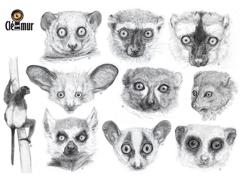 lemuriens_en_etude_par_alix_thiebault_au_no_mad_2019_biodiversite_madagascar