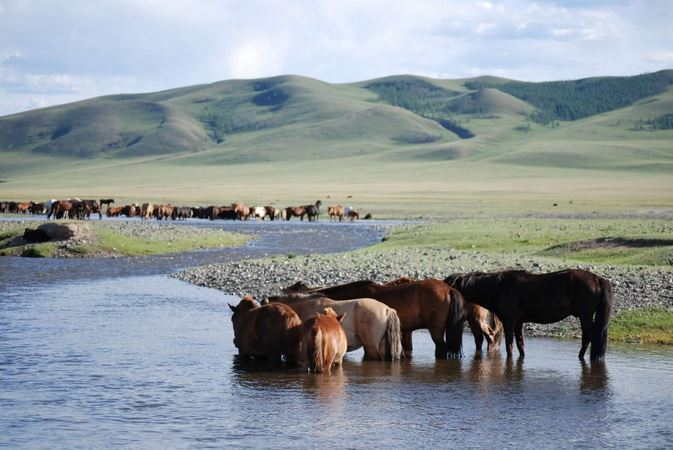 mongolie1